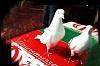 پیام تسلیت پایگاه قرآنی شهرستان دهاقان به مناسبت شهادت سرباز مدافع حرم علیرضا نادعلی دهاقانی